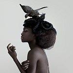 blackbird / Delphine Cencig